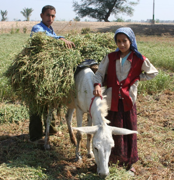 Young_boy_and_girl_harvest_farm_crops_in_Egypt